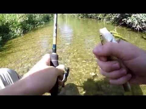 Il sistema di trasporto per pescare per comprare