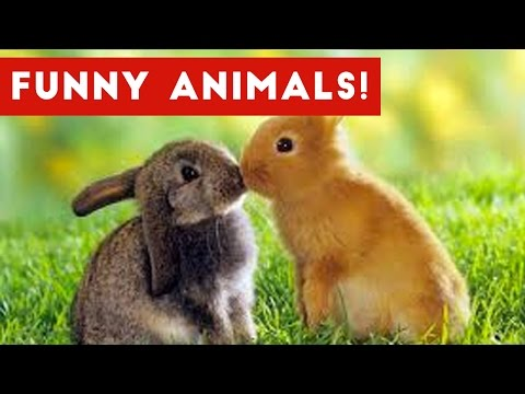 Funny Pet & Animal Clips & Bloopers Weekly Compilation 2016 | Funny Pet Videos