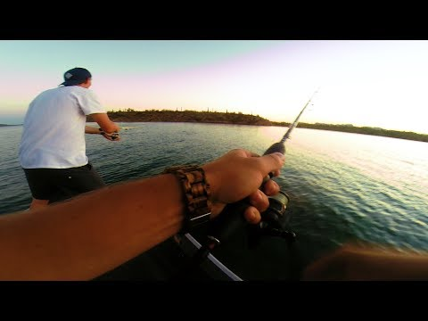 Video THESE FISH ARE INSANE! FISHING LAKE PLEASANT