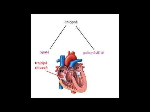Maligní hypertenze patologické anatomie