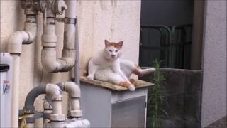 「なに見てんだよ?」な猫さん。。 The cat which I noticed being seen