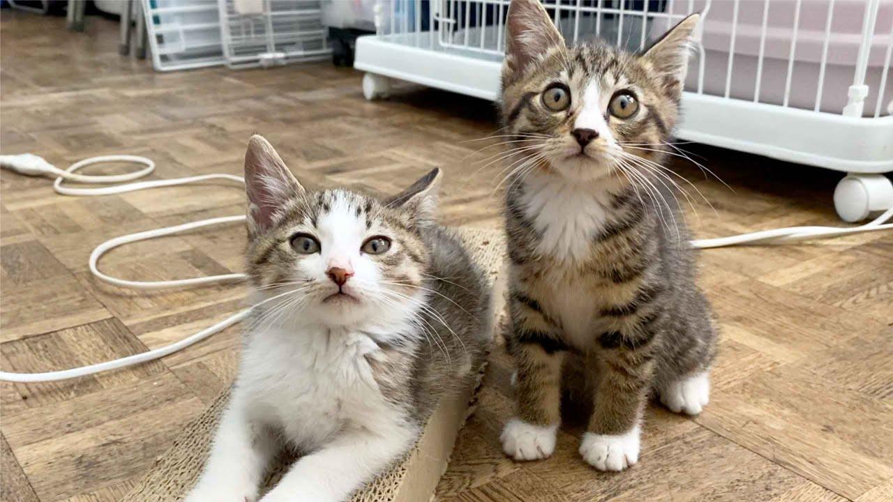 【重大発表】新たに子猫をお迎えすることになりました!