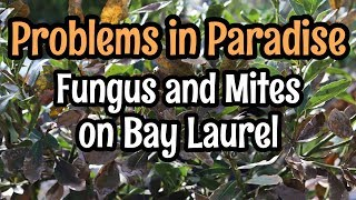 Problems in Paradise- Fungus and Mite Infestation on Bay Laurel Leaves