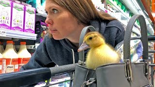 Little duckling, you're going to see the world today