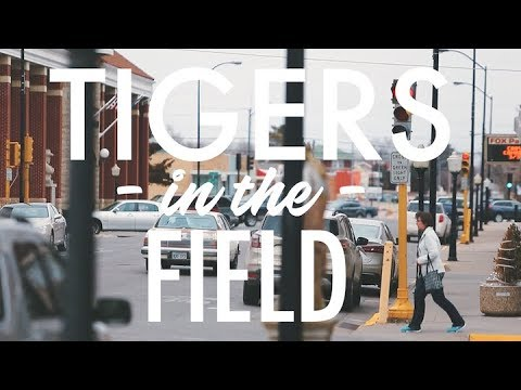 Tigers in the Field - Delaney Silva
