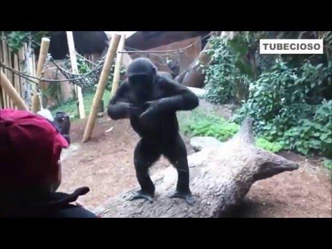 Monos Divertidos y Adorables