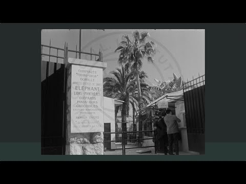 "Instantané ""Monaco en Films"" : Centre d'acclimatation zoologique. 1954. 16 mm. Collection Palméro"