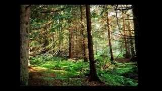 Video Иска ми дума гората