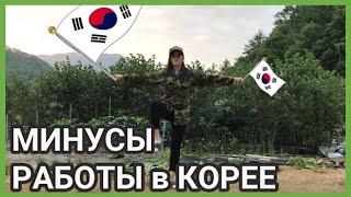 7 минусов работы в Южной Корее / поиск, собеседование, больничный, отпуск, отношения на работе