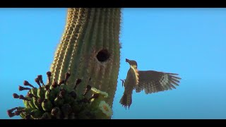 A Day in the Desert: Saguaro Wilderness
