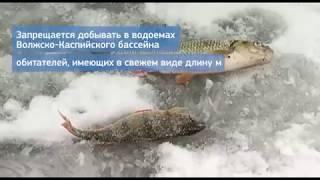 Правила любительского рыболовства в саратовской области