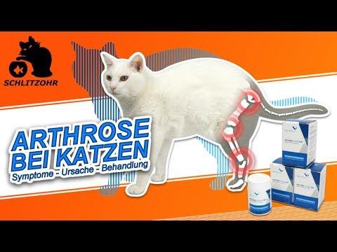 🔥Arthrose bei Katzen   Ursache & Symptome   VetAthletics   Arthroshine HA²