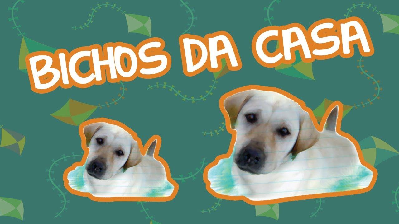 BICHOS DA CASA | BEBÊ MAIS BICHOS