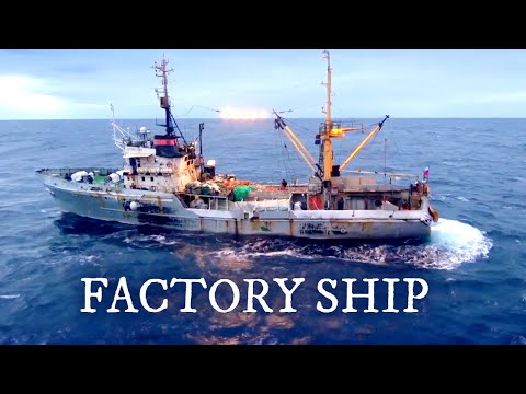 Largest Fish Factory Vessel. Episode 2   Documentary   Science Channel