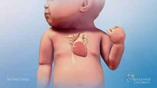Beating Heart Animation: How a Normal Heart Works