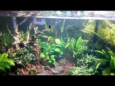 Aquascape DIY Sistem Hemat