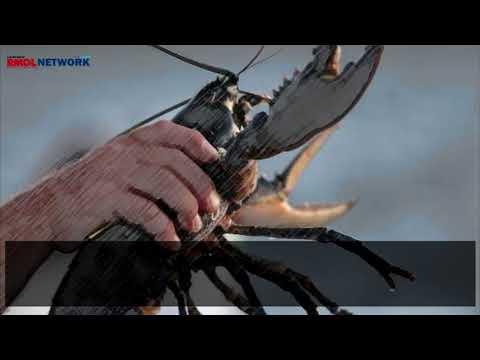 Kepala DKP: Penangkapan Benur Lobster Di Bandarlampung Ilegal