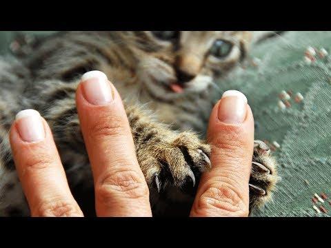 Поцарапала кошка ЧТО ДЕЛАТЬ и ЧЕМ ЛЕЧИТЬ, как восстановить кожу после царапины от кошки