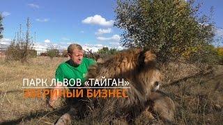 Парк львов «Тайган». Звериный бизнес