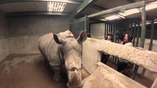 Desde el Zoológico: Dormitorio de rinocerontes