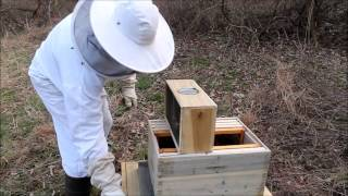 Step by Step Guide: Starting a Bee Hive with boxed bees Tutorial Beginners Guide