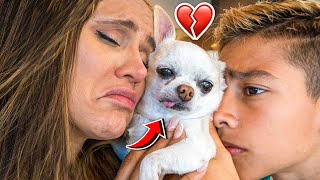 WE REALLY MISS OUR DOG.. 💔 | The Royalty Family