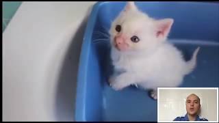 Котята ростов на дону одного месяца