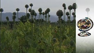 The Taliban's Two-Faced Poppy Policy