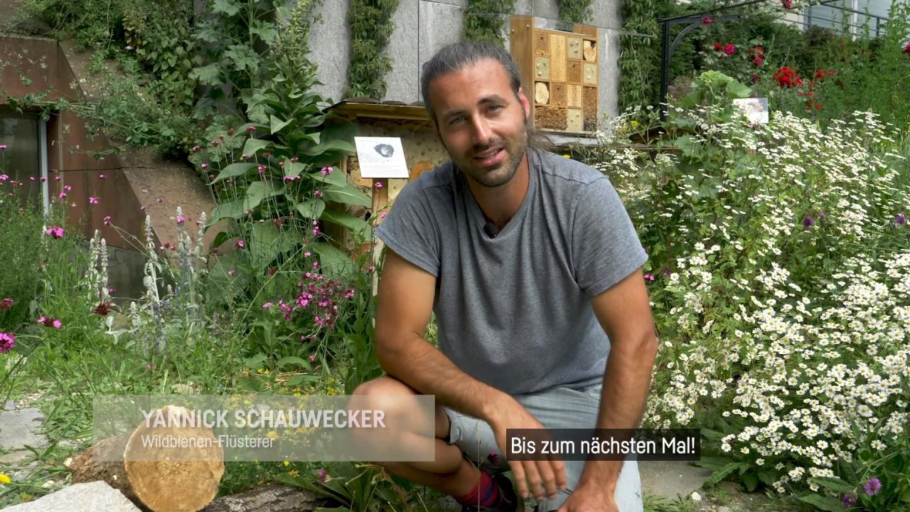 Wie fördere ich mit Totholz einheimische Wildbienenarten?