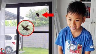 นกกระจอกบินเข้ามาในบ้าน