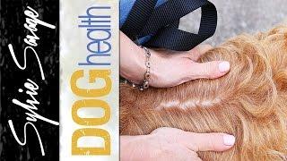 Dog dandruff - how to get rid of dry flaky skin