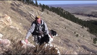 Tips For Finding Elk Shed Antlers