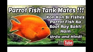 Parrot Fish Tank Mates !!! Urdu and Hindi