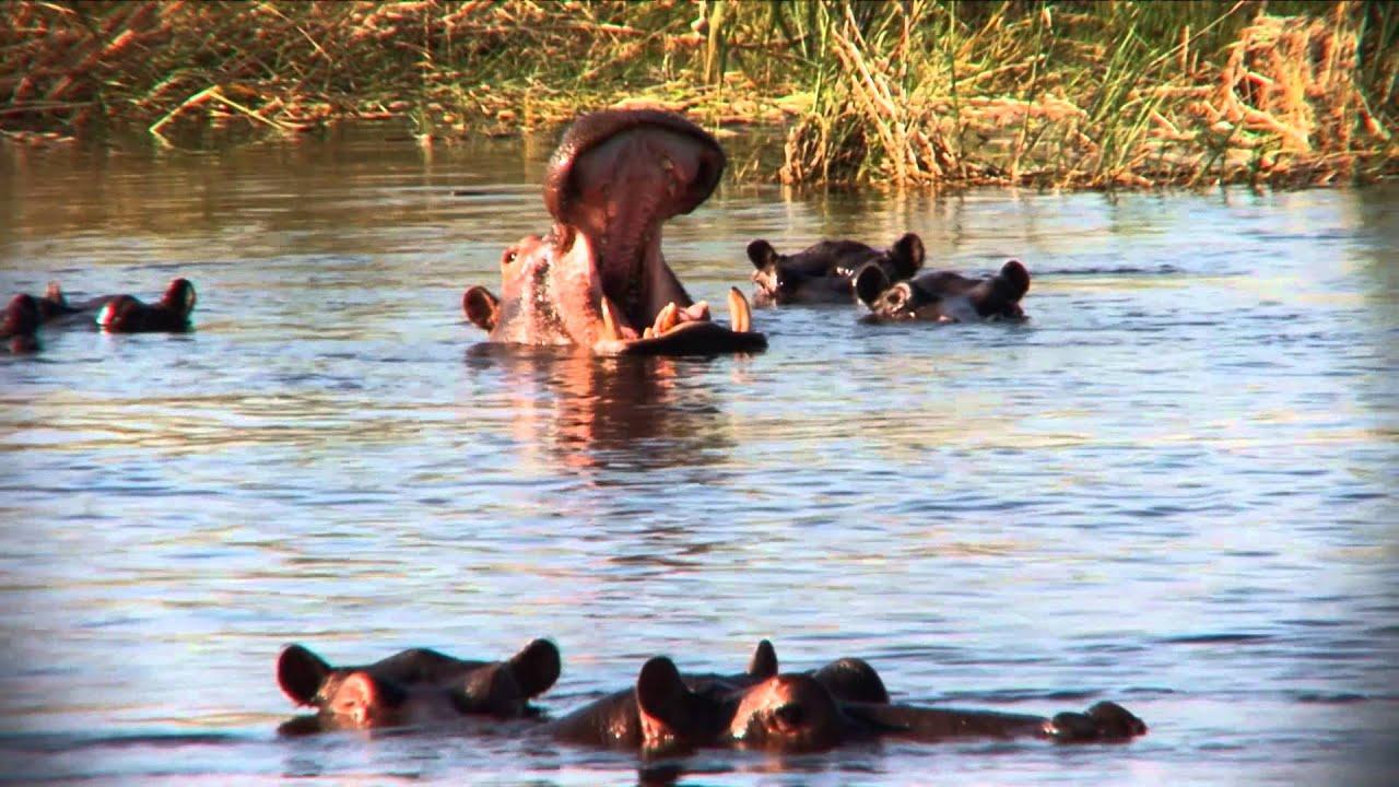 Namibia: Etosha Nationalpark (0:32)