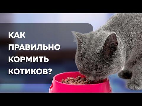 Чем кормить кошек? | Лайфхакер