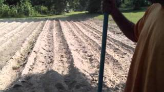 Planting a Second Crop of Squash in the Vegetable Garden