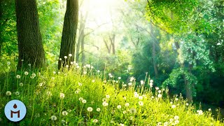 Nature Sounds Relaxing Music 🌿 Ambience Music Therapy, Birdsong Relaxing Meditation Forest Sounds