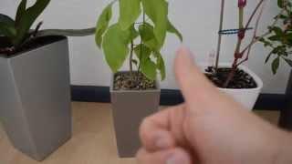 Lechuza Pflanzgefäße mit Erd-Bewässerung - Kleine Rezension