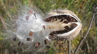Seed dispersal -- The great escape