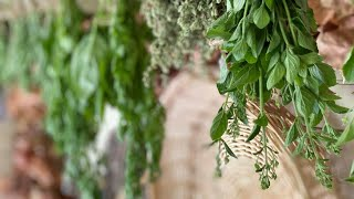 I Created A Place For Drying Herbs By Hanging Them At Our Home.