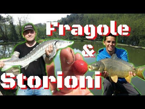Estate pescando nel video di regione di Samara