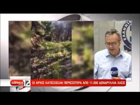 Χασισοφυτεία-μαμούθ εντόπισε η ΕΛ.ΑΣ.   12/06/2019   ΕΡΤ