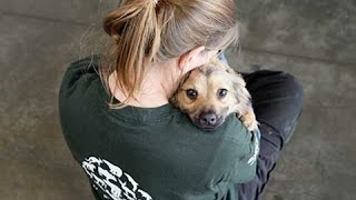 Dogs SAVED from being Eaten in Yulin Dog Meat Festival