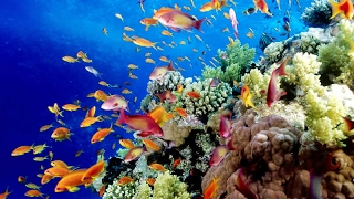 Australias Great Barrier Reef: Biodiversity And Marine Life Threatened