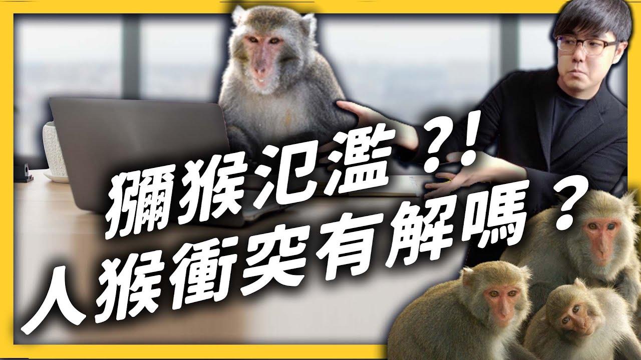捷運站、辦公室,哪來這麼多猴子?你知道現在臺灣獼猴已經不是保育類了嗎?《 大自然ㄉ逆襲 》EP 014|志祺七七