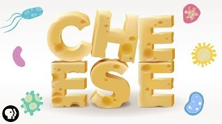 The Delicious Science Of CHEESE!