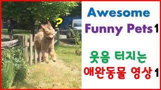 웃음터지는 귀여운 애완동물 모음#1  Awesome Funny Pet Animals#1