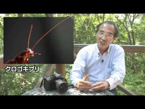 海野和男の新昆虫教室、第二回「昆虫の多様性」後編