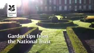 Top Tips from National Trust gardens - January