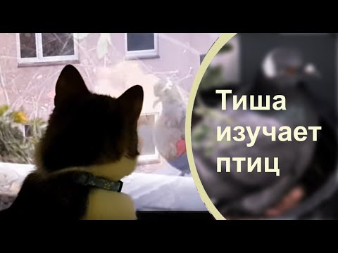 КОТ СМОТРИТ ролики на ЮТУБЕ